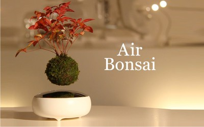 air bonsai 1